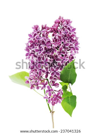 Digital Painting Of Blossoming lilac - stock photo
