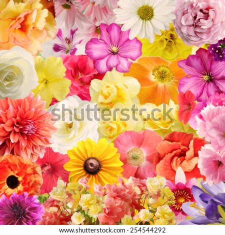 Digital Painting Of Colorful Floral Background - stock photo