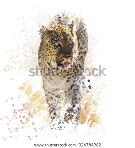 Digital Painting of Leopard on White Background - stock photo