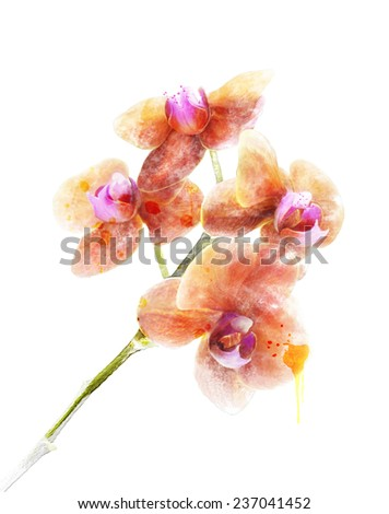 Digital Painting Of Orchid Flower - stock photo