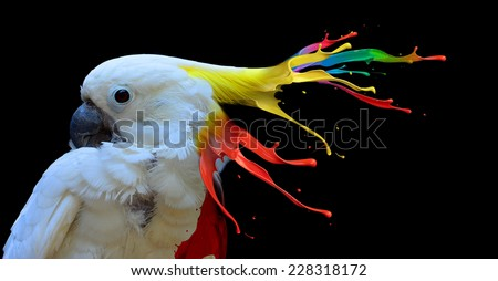 Digital photo manipulation of a white parrot - stock photo