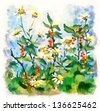 Digital version of flower Watercolor Painting. Summer landscape with daisies and currant bush - stock vector