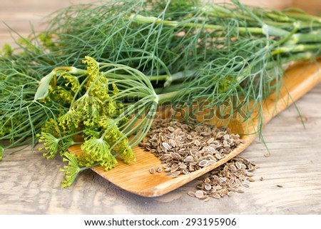 dill and seeds on a wooden spoon - stock photo