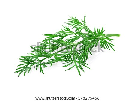 dill herb isolated on white background - stock photo