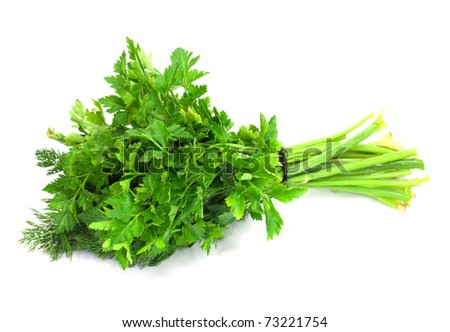 dill parsley to spices bunch isolated on white background - stock photo