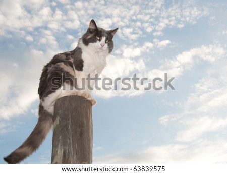 Diluted calico cat sitting on a fence post against cloudy skies - stock photo