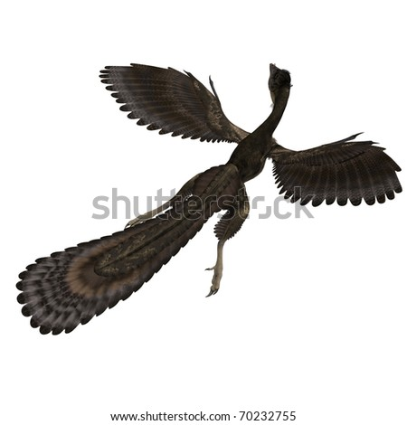 Dinosaur Archaeopteryx. 3D rendering with clipping path and shadow over white - stock photo