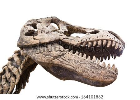 Dinosaur skeleton over white isolated background - stock photo