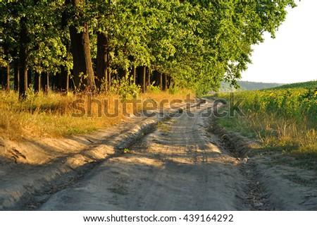 dirt clay road near trees - stock photo