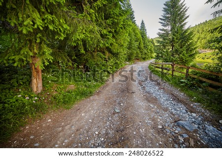 Dirt countryside road in the forest with pines - stock photo
