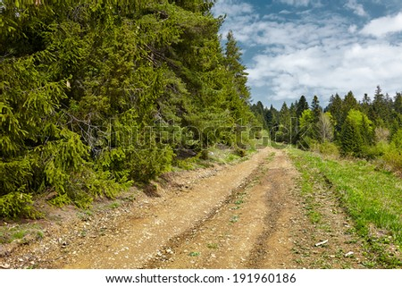 Dirt countryside rural road landscape with pines and blue sky - stock photo