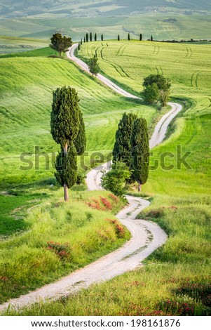 Dirt road and green field in Tuscany, Italy - stock photo