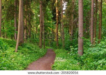 dirt road goes deep into the summer forest - stock photo