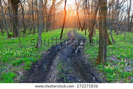 Dirt road in spring forest among flowers meadow - stock photo