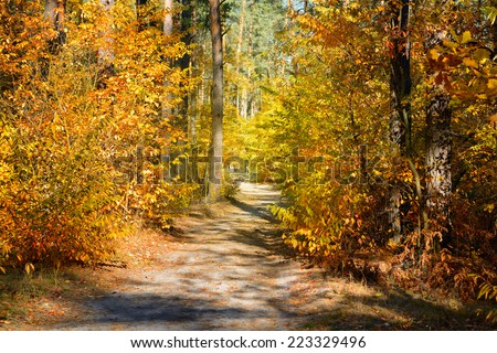 Dirt road in the colorful fall forest - stock photo