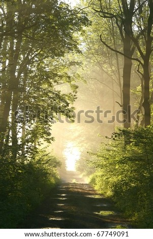 Dirt road leading through the deciduous forest on a foggy spring morning. - stock photo