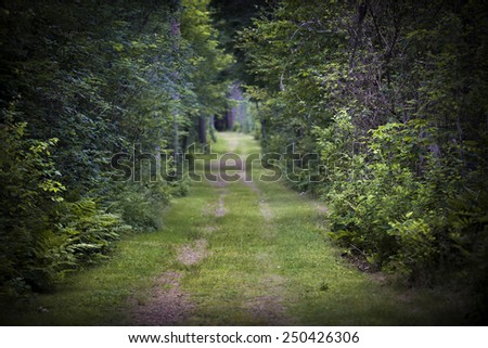 Dirt road lined with shrubs and trees through dense green forest. Intentionally shallow depth of field. - stock photo