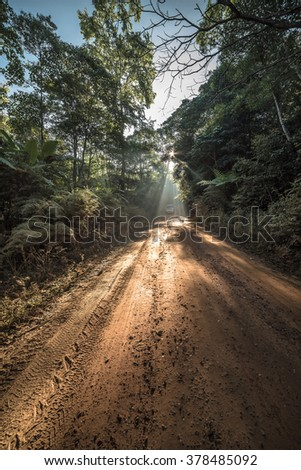 Dirt road through deciduous forest at dawn. - stock photo