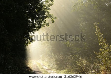 Dirt road through the forest on a misty morning. - stock photo
