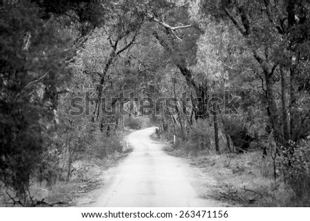 Dirt road winding through a dense forest in winter in shallow focus in black and white - stock photo