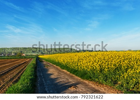 Dirt road with canola field