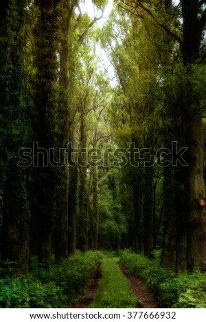 Dirt way in a magical forrest in a forgotten castle park. Picture with textures, dreamy, mystical effect - stock photo