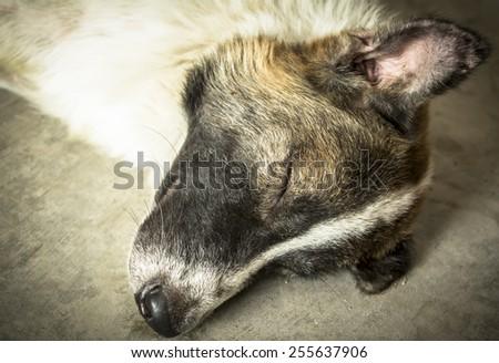 Dirty abandoned dog sleeping on road - stock photo