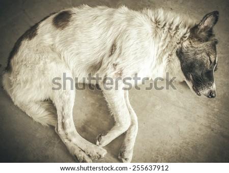 Dirty abandoned dog sleeping on road,retro style - stock photo
