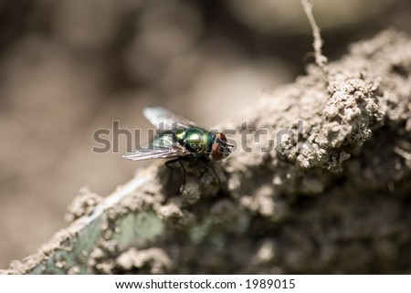 Dirty Fly on a Spade - stock photo