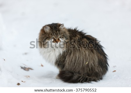 dirty homeless cat sleeping on the snow