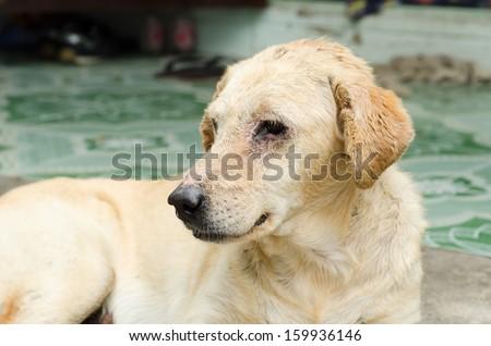dirty homeless dog sadness - stock photo