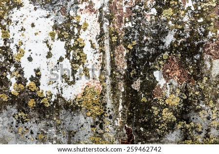 dirty paint texture with moss and braid  - stock photo