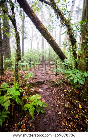 dirty pathway in rain forest of thailand - stock photo