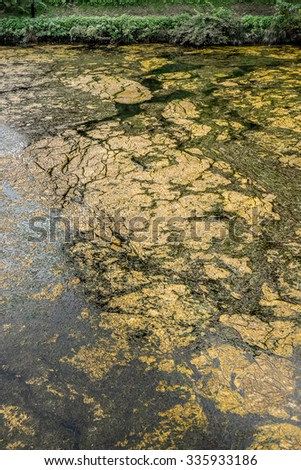 dirty pond water - stock photo