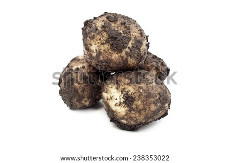 Dirty potatoes isolated on a white background - stock photo