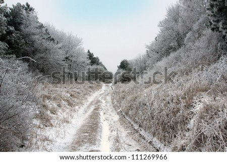 dirty road in forest in winter time