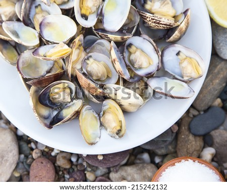 Dish of Delicious Fresh Steamer Clams with a lemon and a little bowl of salt on pebble table - stock photo
