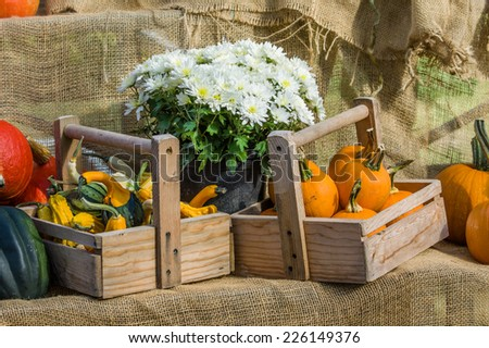 Display of fall pumpkins and gourds at the market - stock photo