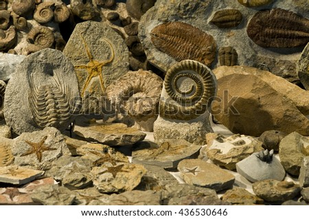 Display of many fossils.