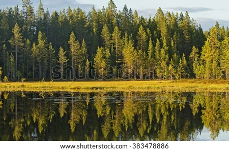 Displaying autumn coniferous forest in the water, lake, finland - stock photo