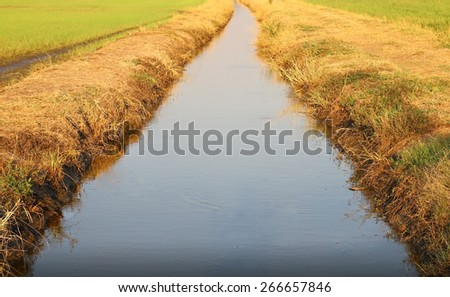ditch of water use in rice farming  - stock photo
