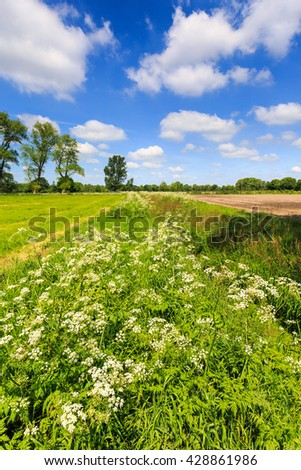 Ditch with weed flowers in spring time in Holland - stock photo