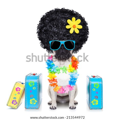 diva pug dog with stack of luggage for the summer vacation ready for holidays - stock photo