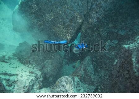 Young Girl Underwater Stock Photo 175237901 Shutterstock