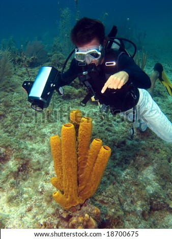 Dive Master pointing at a Sea Sponge in the Cayman Islands