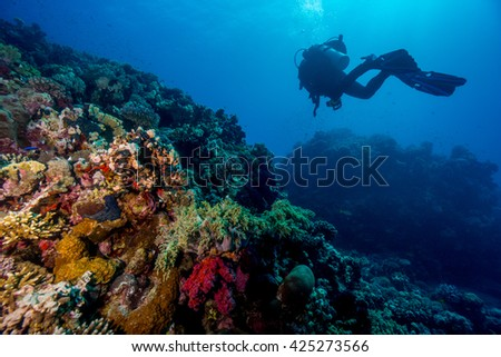 Diver above coral reef. Southern Red Sea.