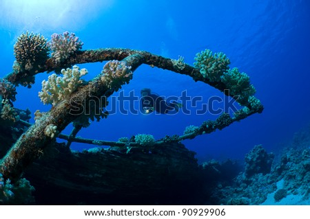 Diver and hard corals. - stock photo