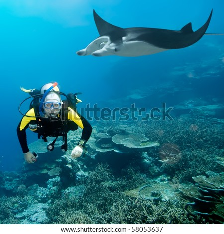 Diver and manta underwater. Coral reef on background