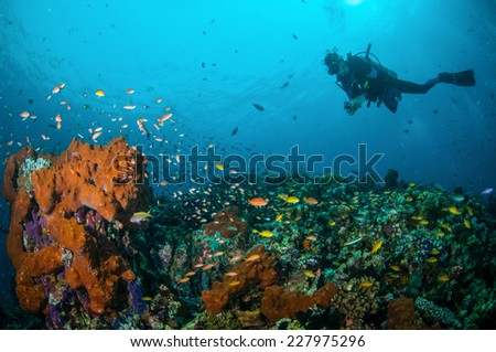 Diver and various reef fishes swimming above the coral reefs in Gili, Lombok, Nusa Tenggara Barat, Indonesia underwater photo. There are sponge, hard coral