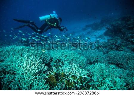 diver blue water scuba diving bunaken indonesia sea reef ocean - stock photo